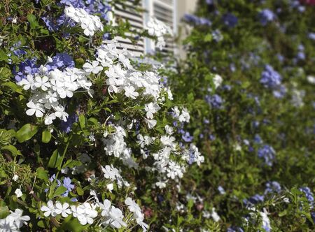 Provencal image White window with white and violet flowers. Unfocused flower background.