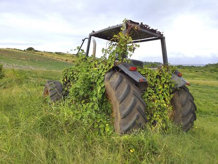 Abandoned tractor in field with vegetation rooted in its structure.