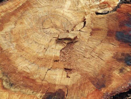 Tree trunk with traces of saw cut and cracked background. Abstract ocher colored wood texture.