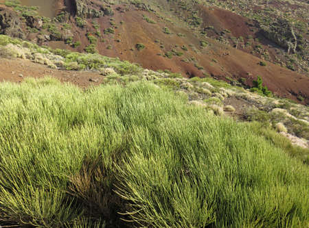 Perspective view of exuberant high mountain vegetation on volcanic slopes of black earth, contrasting colors and textures. Nature, flora and geology background.