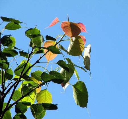 Autumn leaves in the blue sky                                Stock Photo
