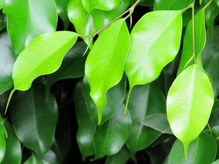 Beautiful green leaves                                 Stock Photo - 14333905