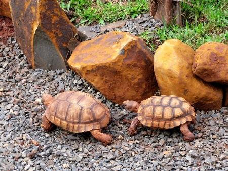 Turtles in the wild nature of South America