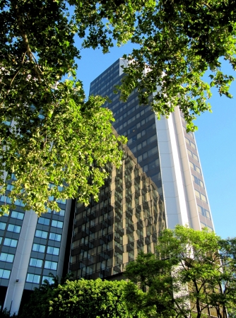 High-rise buildings in the big city among trees                                Stock Photo