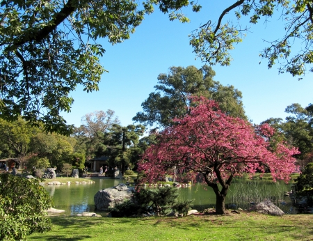 Spring landscape in the Japanese garden                                photo