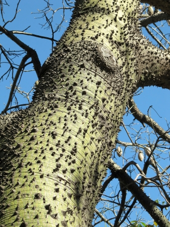Wide tree trunk with thorns close up photo