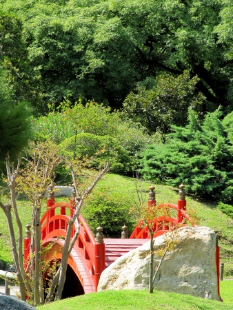 Bent red bridge in a traditional Japanese garden among greens                                photo