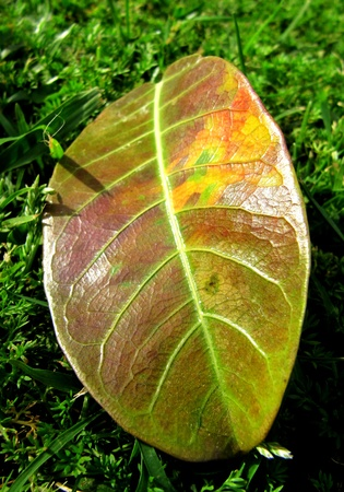 Big autumn colourful leaf on a grass