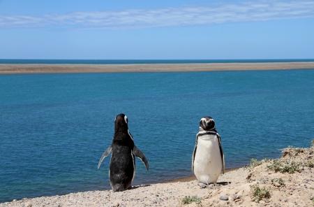 ridicolo: Ridicolo coppia di pinguini di Magellano, sulla costa atlantica Archivio Fotografico