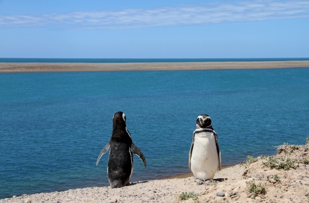 Ridiculous couple of penguins Magellanic on the Atlantic coast  Stock Photo - 16873976