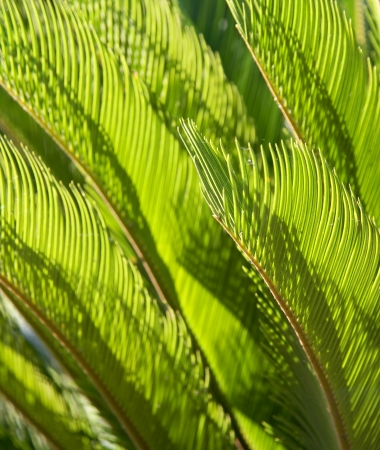 Green Palm leaves decorative background. Stock Photo - 17109179