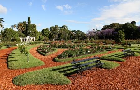Summer gardens of roses  Landscape
