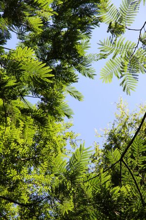 Young green foliage of a tree against the sky