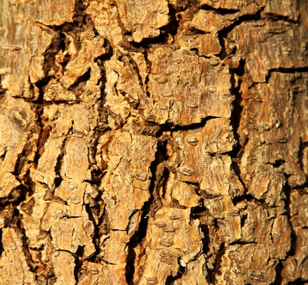 basis: Wooden bark with a crack  Abstract background