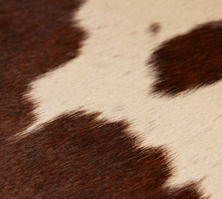 Leather material. Skin of a cow. Stock Photo