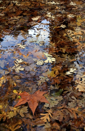 Pool with autumn fallen leaves