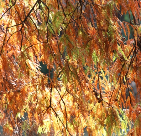 Bright autumn tree branches on the sun  Stock Photo
