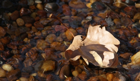 Autumn lonely leaf in a stream   photo