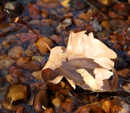 Autumn lonely leaf on the sun in a stream   Stock Photo
