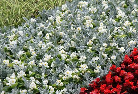 cosiness: Flower summer bed in a garden. Stock Photo
