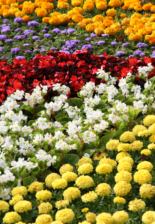 cosiness: Flower color exhibition. Summer garden and design of a bed.