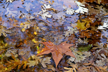 Autumn dry leaves in a pool. Stock Photo