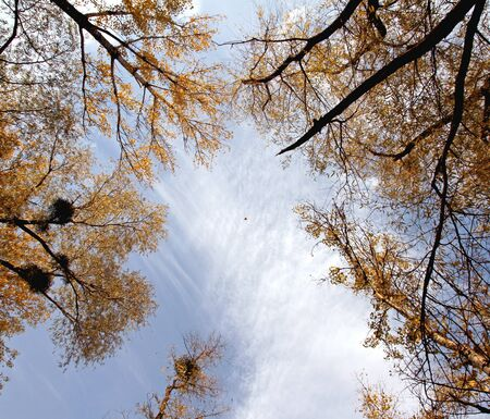 aspire: Autumn trees aspire up. Look in the sky.