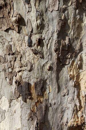 clarification: Plan tree bark surface.