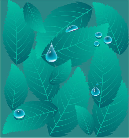Background of water drops on a leaves Vector