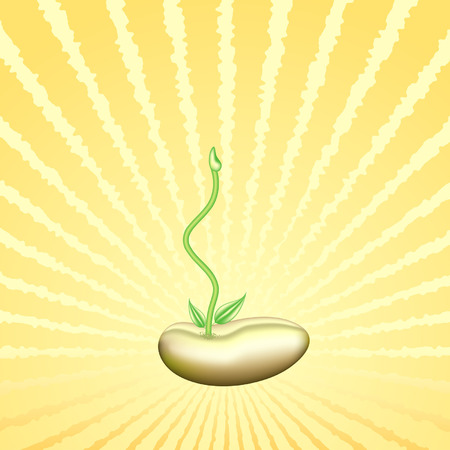 bean sprouts: Young sprout on a solar background