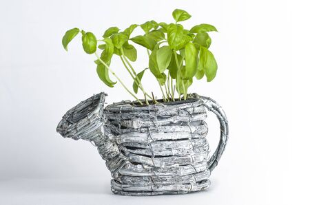 basil: Basil plant with potted shape of watering can. Stock Photo
