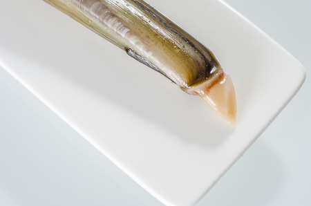 bivalve: Raw razor-shell on a white dish on white background.