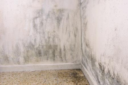Schimmel und Feuchtigkeit bauen auf einer Wand. Standard-Bild