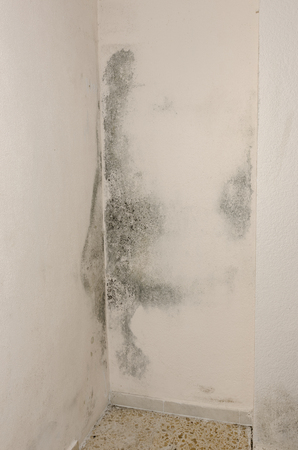 Mould and moisture build up on a wall.