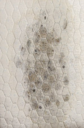 Closeup of mold on mattress, health problems