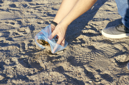 Woman picking up dog poop on the beach. Stock Photo