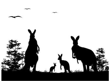 australian outback: silhouette of the kangaroo family