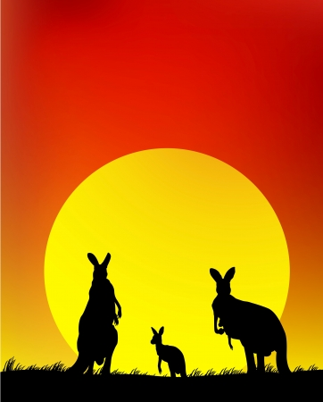 Австралия: Силуэт семьи кенгуру