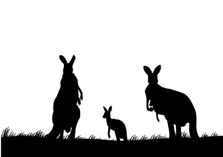 australian outback: silueta de la familia de los canguros