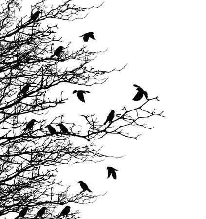 oiseau mouche: la silhouette des arbres � la mouche oiseau