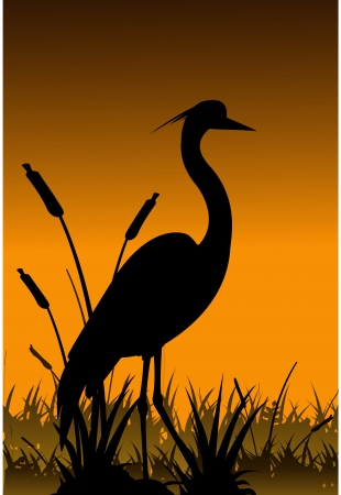 tranquil scene: heron silhouette