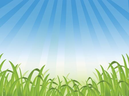 sedge: beautiful grass background Illustration
