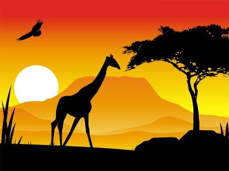 savanna: giraffe silhouette illustration with background scenery Illustration