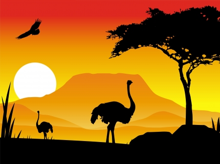 silhouette illustration of an ostrich with background scenery Stock Vector - 14474327
