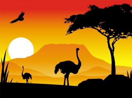 avestruz: silueta de ilustración de un avestruz con paisajes de fondo