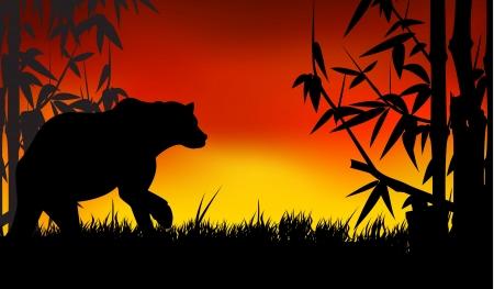 bear silhouette: sopportare silhouette Vettoriali