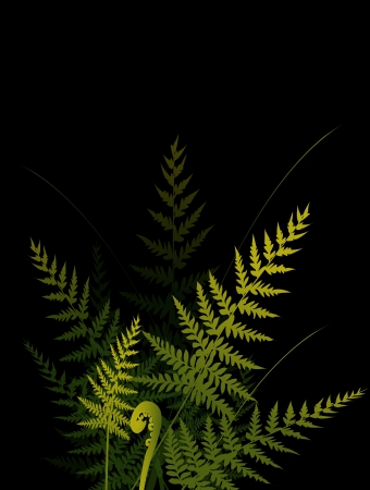 ferns on dark background  Vector