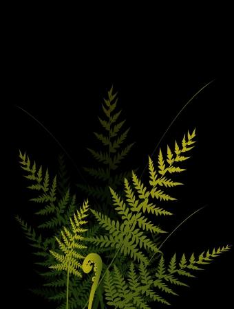 rain forest: ferns on dark background