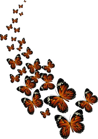 a bunch of butterflies flying together Vector
