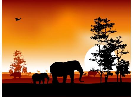 Safari background Stock Vector - 14474427